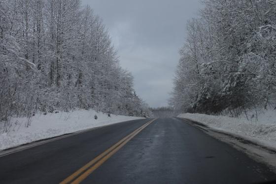 snow, trees, pavement,