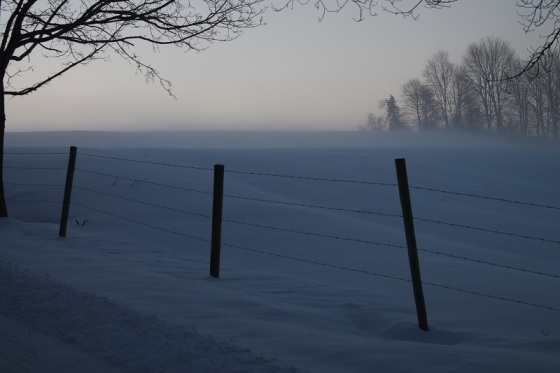 morning, field, winter,