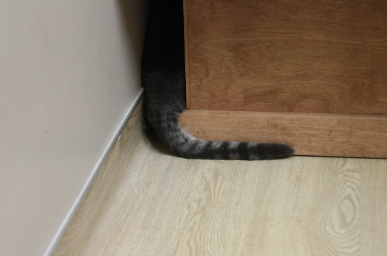 scared cat, cat's tail,