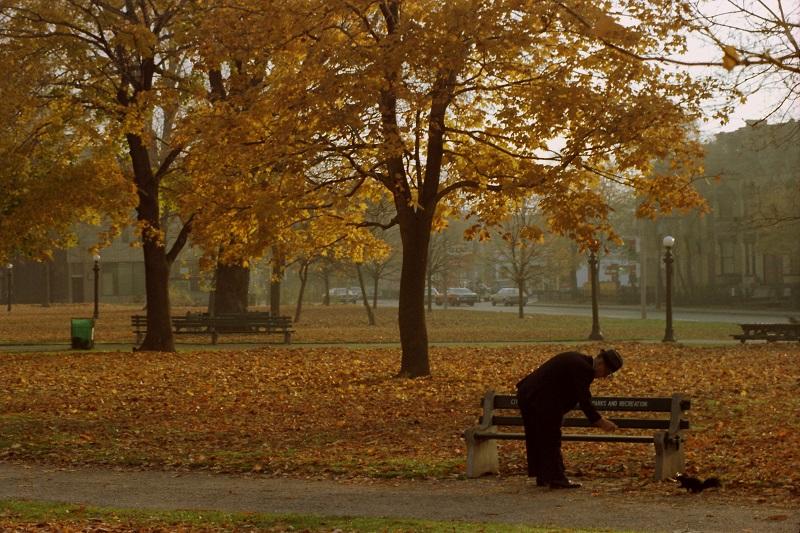 Allan Gardens, Toronto,1981