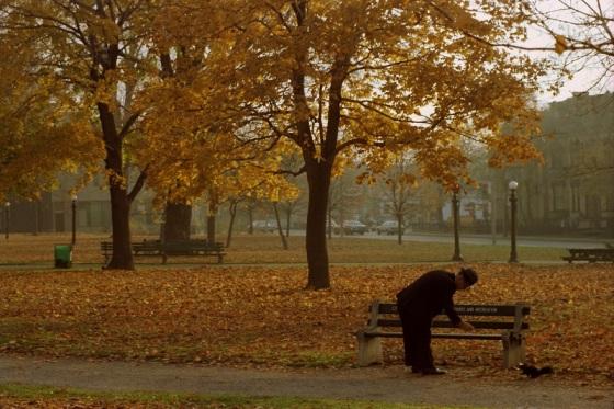 Allan Gardens Park