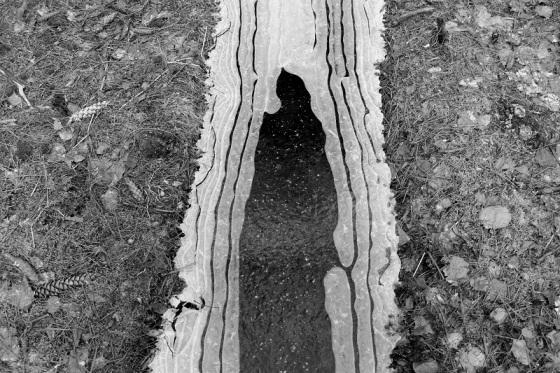 ice design, winter, forest,