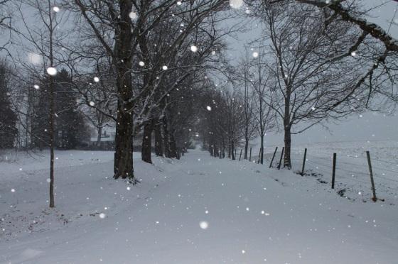 snow, snowflakes, driveway,