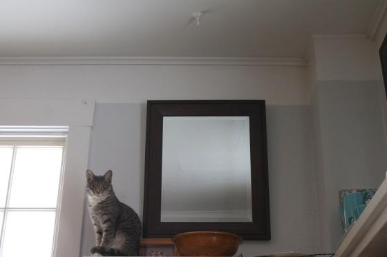 cat, mirror,