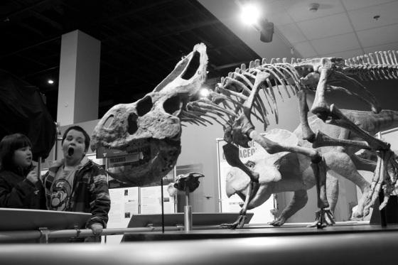 museum, dinosaurs