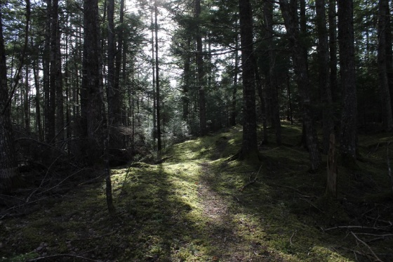 forest, forest bathing,