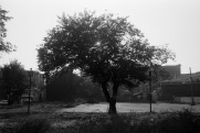tree, Toronto, 1983