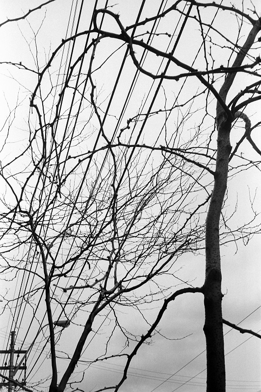 Winter Trees, Toronto, 1984