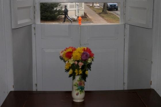 flowers, pedestrian, Inglis Street, Halifax,